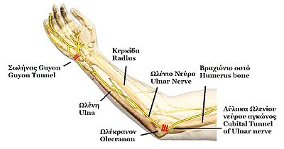 ELBOW NERVE