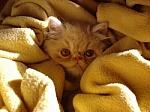 Camouflage_kitten