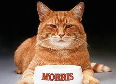 CAT - MORRIS