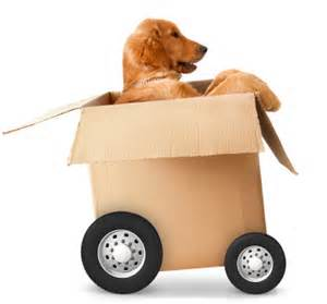 Never leave your animals behind on moving day. Picture - Google