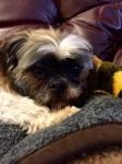 Bailey in Recliner